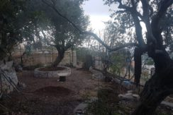 Land And Old House For Sale In Batroun – Derya