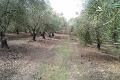 Olive Farm For Sale in Portugal
